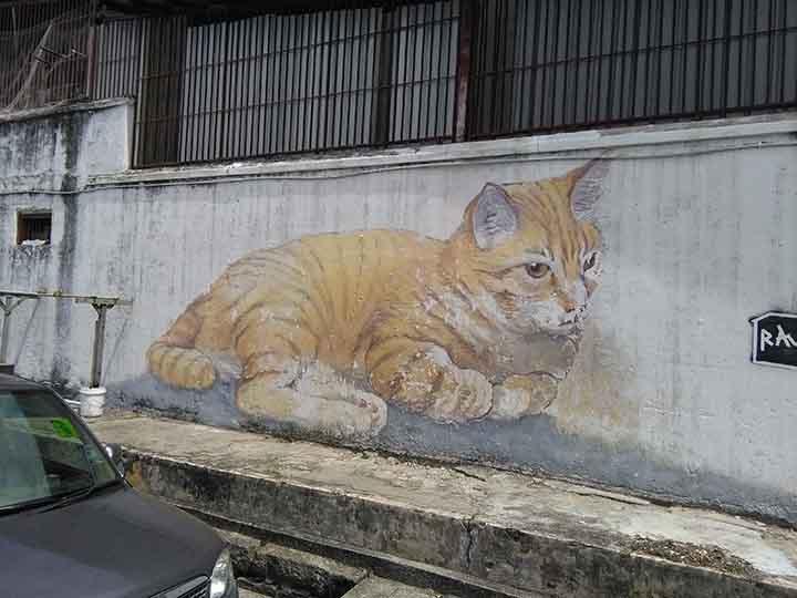 giant kitten
