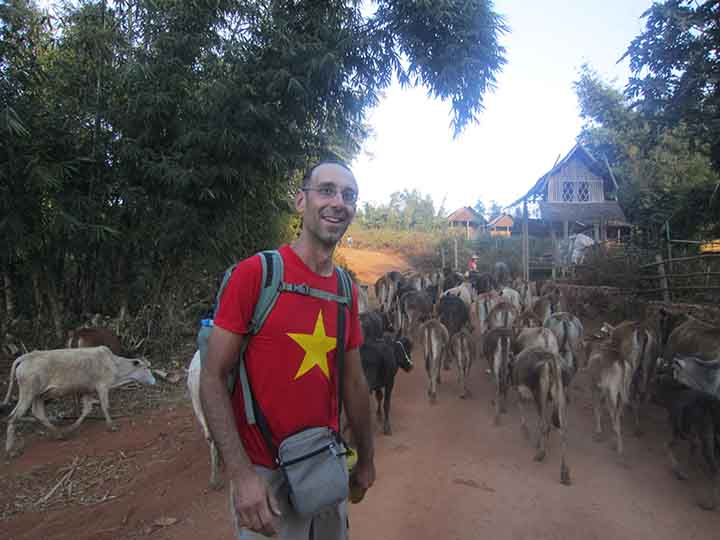 Cows on the trek